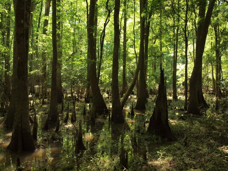 Water Loop Trail in Congaree National Park