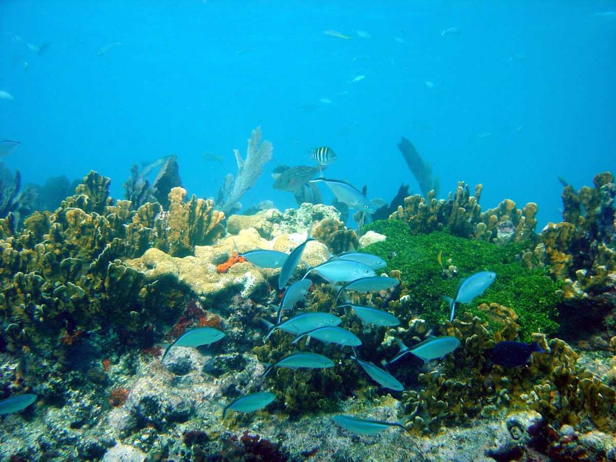 Fish and corals in John Pennekamp Marine Park