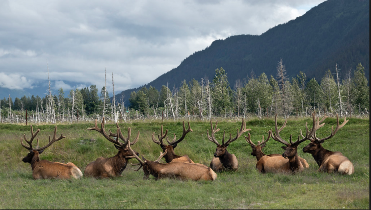 Dedicated to preserving Alaskan wildlife, the Alaska Wildlife Conservation Centre is a non-profit organisation that places importance on the conservation and protection of varying native species.