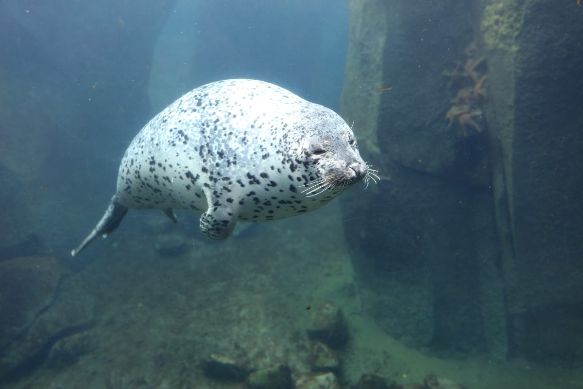 Discover the secrets of the sea at the Alaska SeaLife Centre located in the city of Seward.