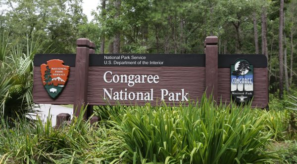 Top 10 Things To Do In Congaree National Park, S.C.