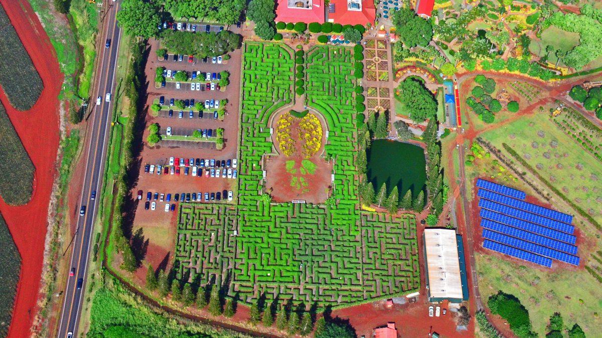 Pineapple Maze, Dole Plantation, Oahu