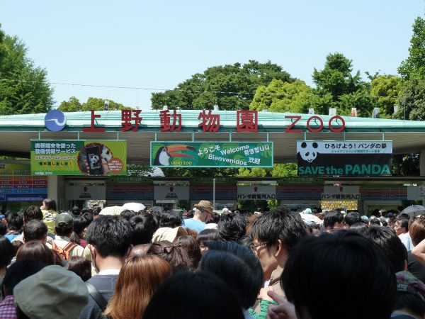 Everything You Need To Know About The Ueno Zoo