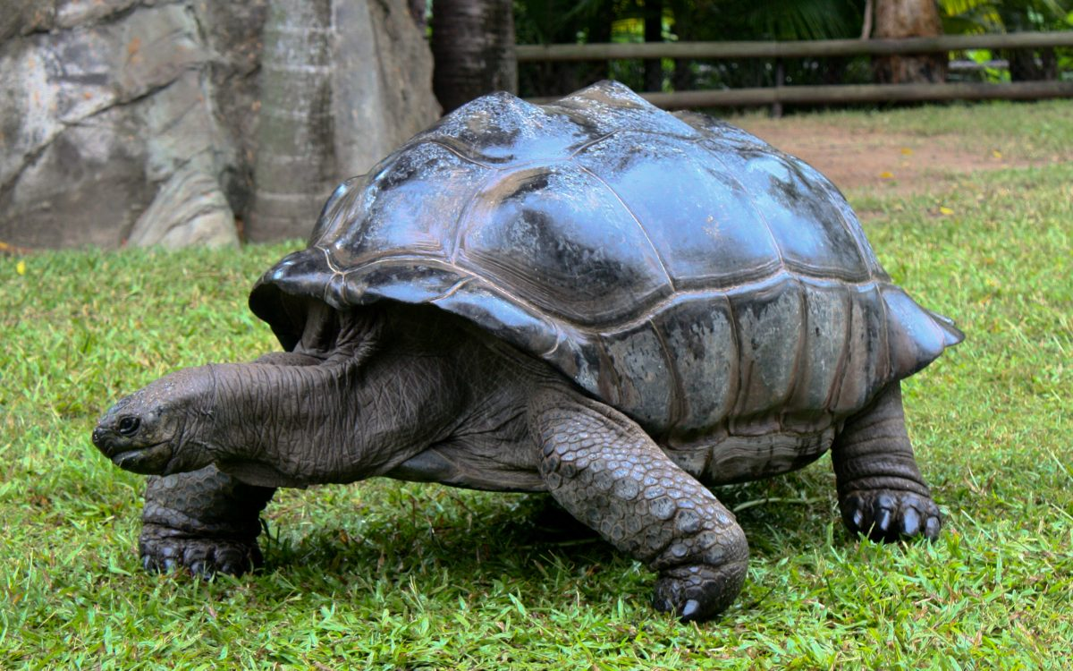 Giant tortoise Australia Zoo 3340301655 - Everything You Need To Know About The Australia Zoo