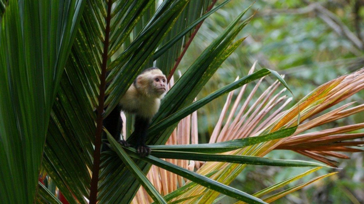 Roatán Gumbalimba Park & Nature Preserve, Roatan Honduras