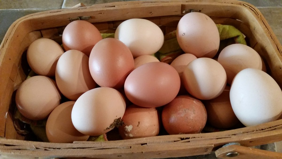 Farm fresh eggs at  Rogers Flea Market auction