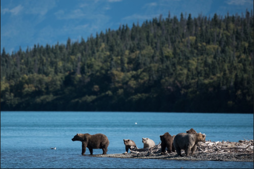 Spectate at the feral yet majestic beauty of Katmai National Park and Preserve.