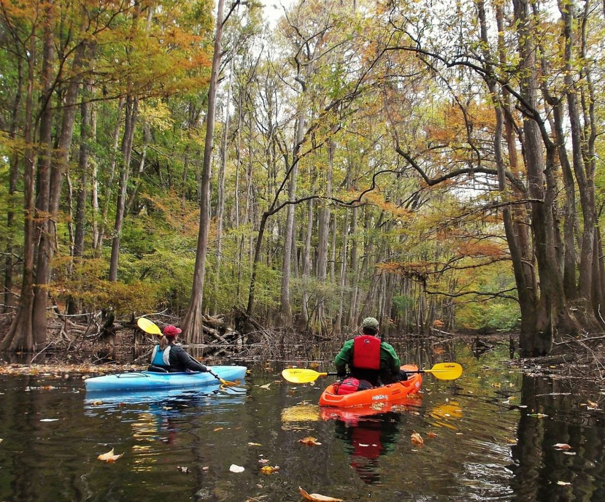 Kayaking at Cedar Creek Kingsnake Trail Congaree National Park