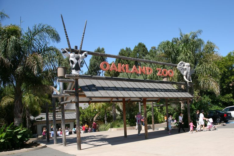 Oakland Zoo is both a fun day out with the kids and a valuable educational visit for all ages