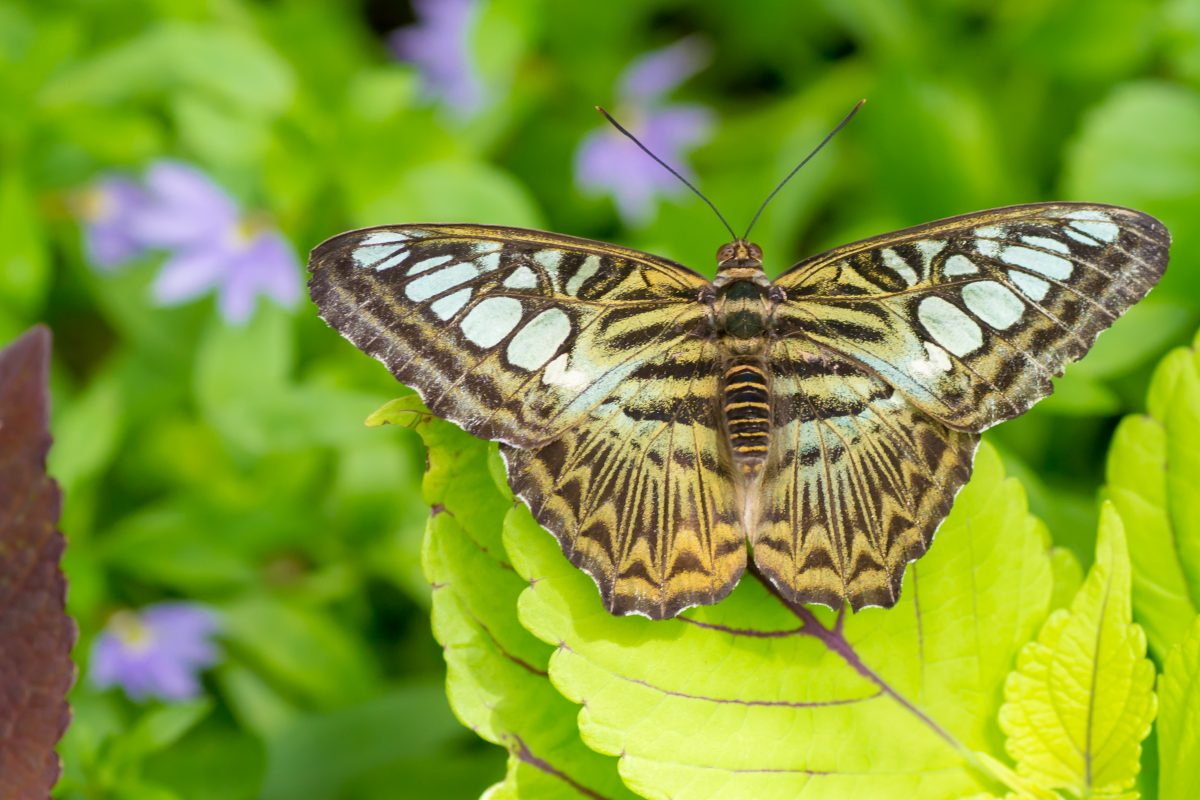 A butterfly at the Krohn conservatory