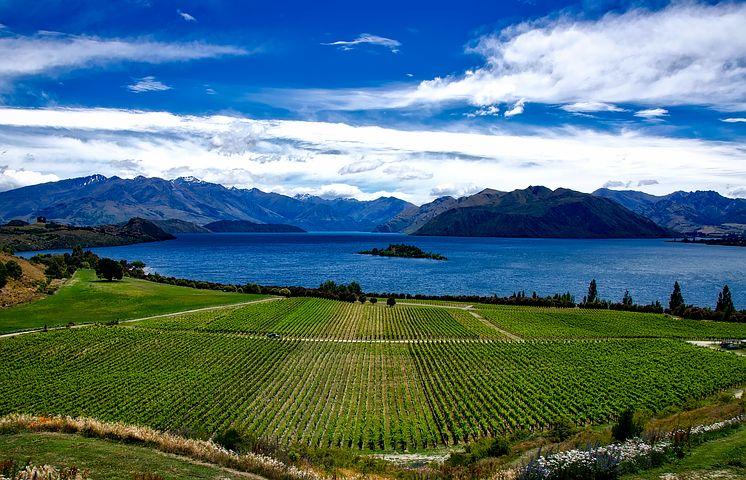 Rippon NZ