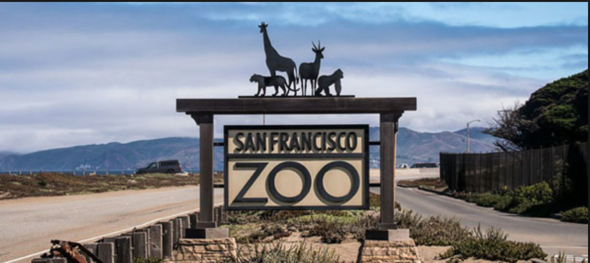 San Francisco Zoo opens its doors to thousands of visitors every year and is home to over 1000 animals of 250 different species