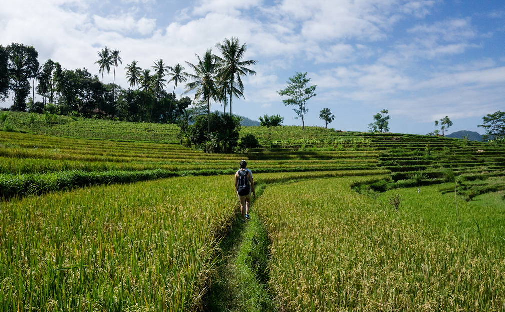 Fiels Indo. Bali