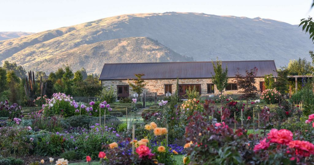 Lavender Farm Wanaka
