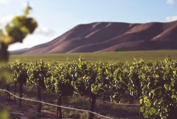 Guide To The Best Wine Safari And Wineries In Malibu, CA