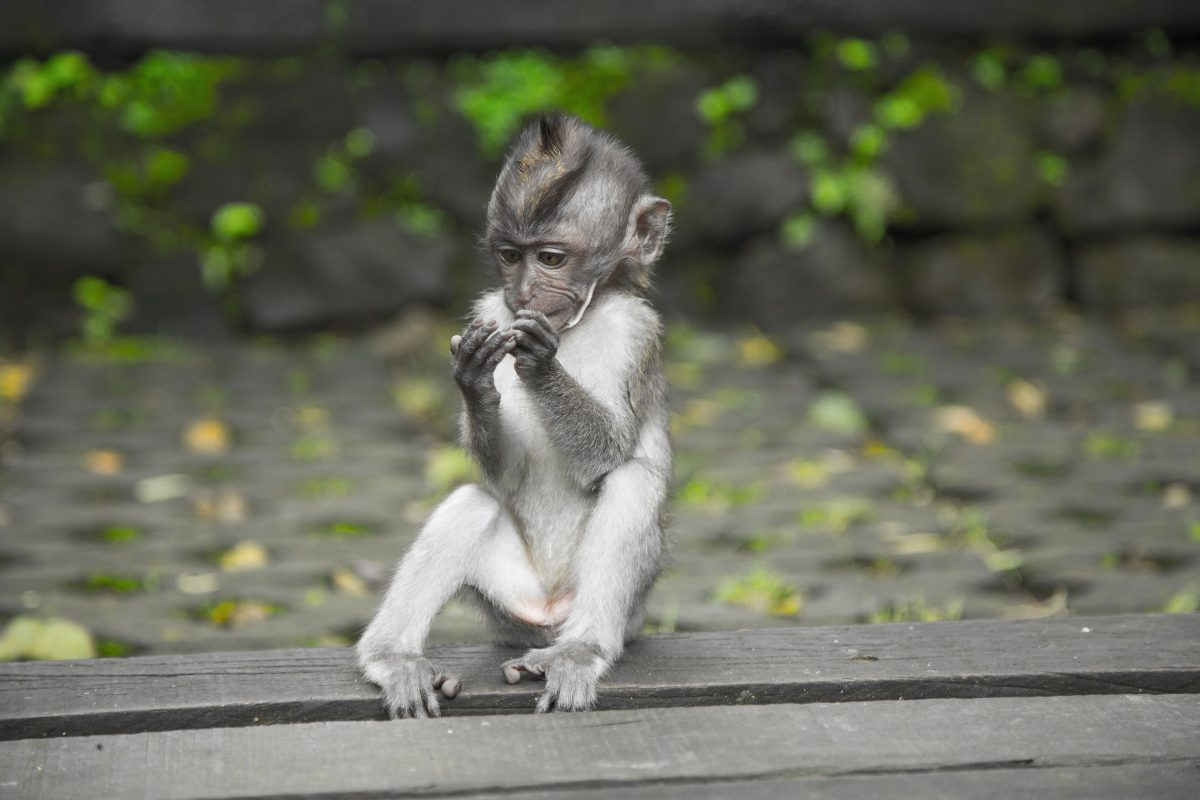 Sacred Monkey Sanctuary in Ubud