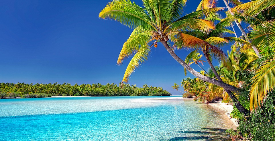 Palm tree on white sand Aitutaki beach, Cook Islands