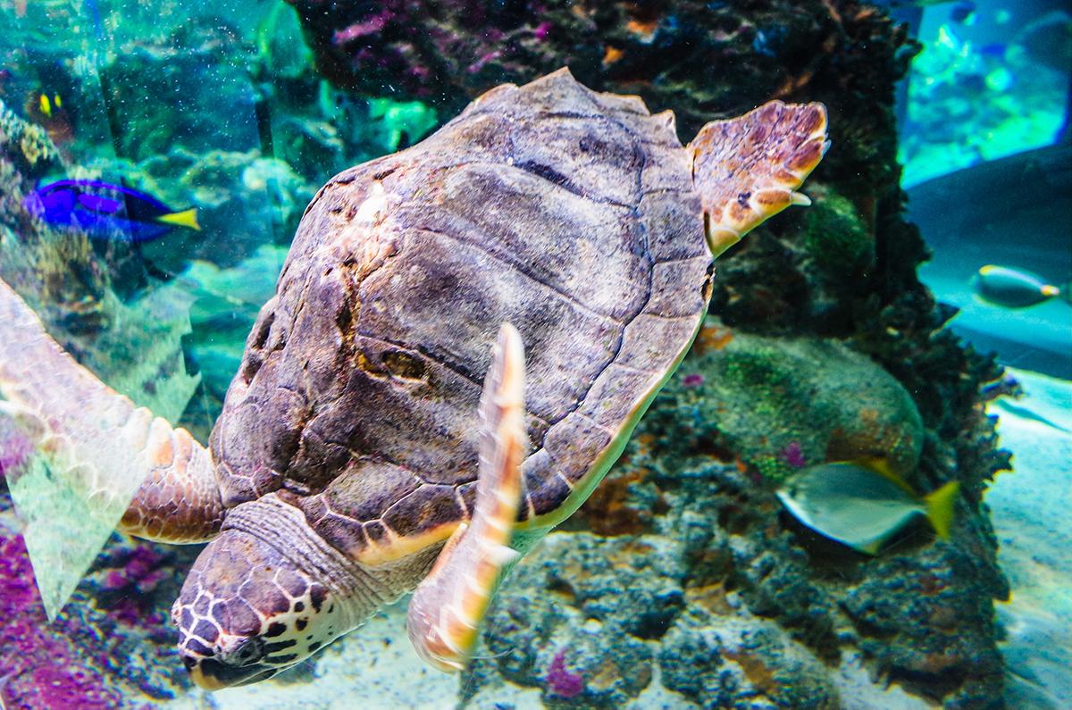 Genoa Aquarium, Genoa, Italy