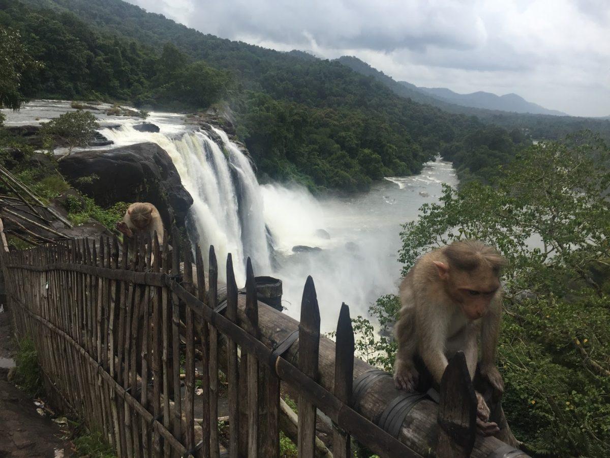 Athirapally Waterfalls Animals