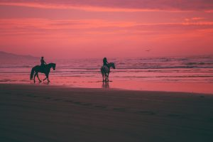 austin neill wQz3vdyueDE unsplash 300x200 - The Best Places To Go Horseback Riding In The US