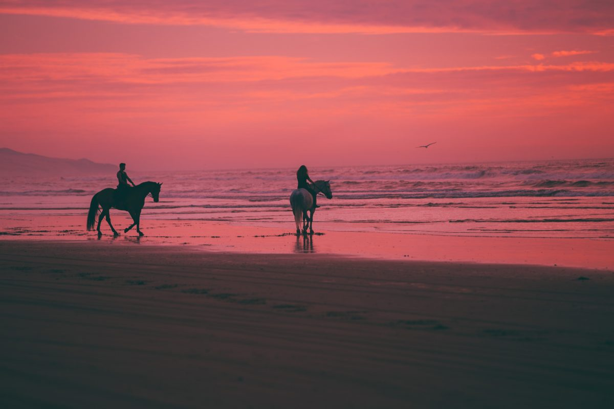 austin neill wQz3vdyueDE unsplash - The Best Places To Go Horseback Riding In The US