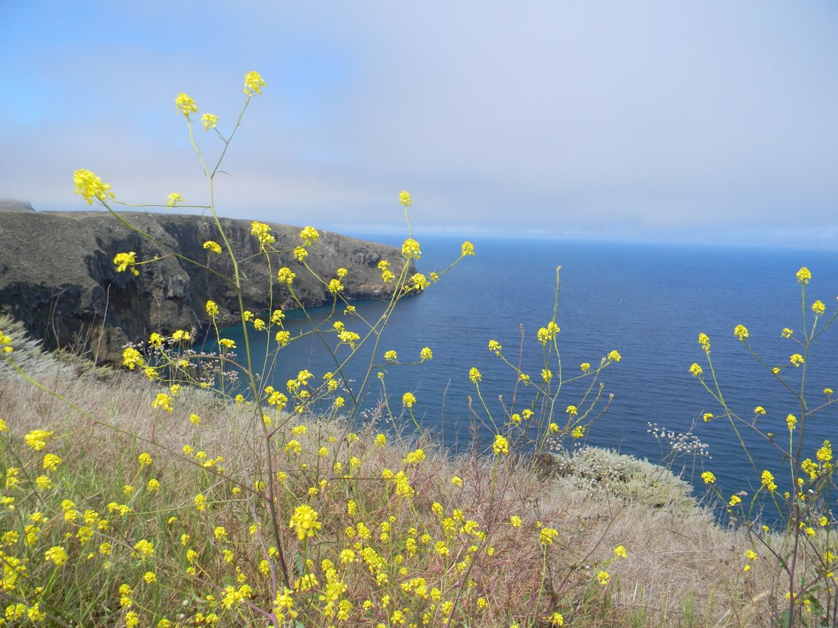 Cliff view of Channel Islands National Park
