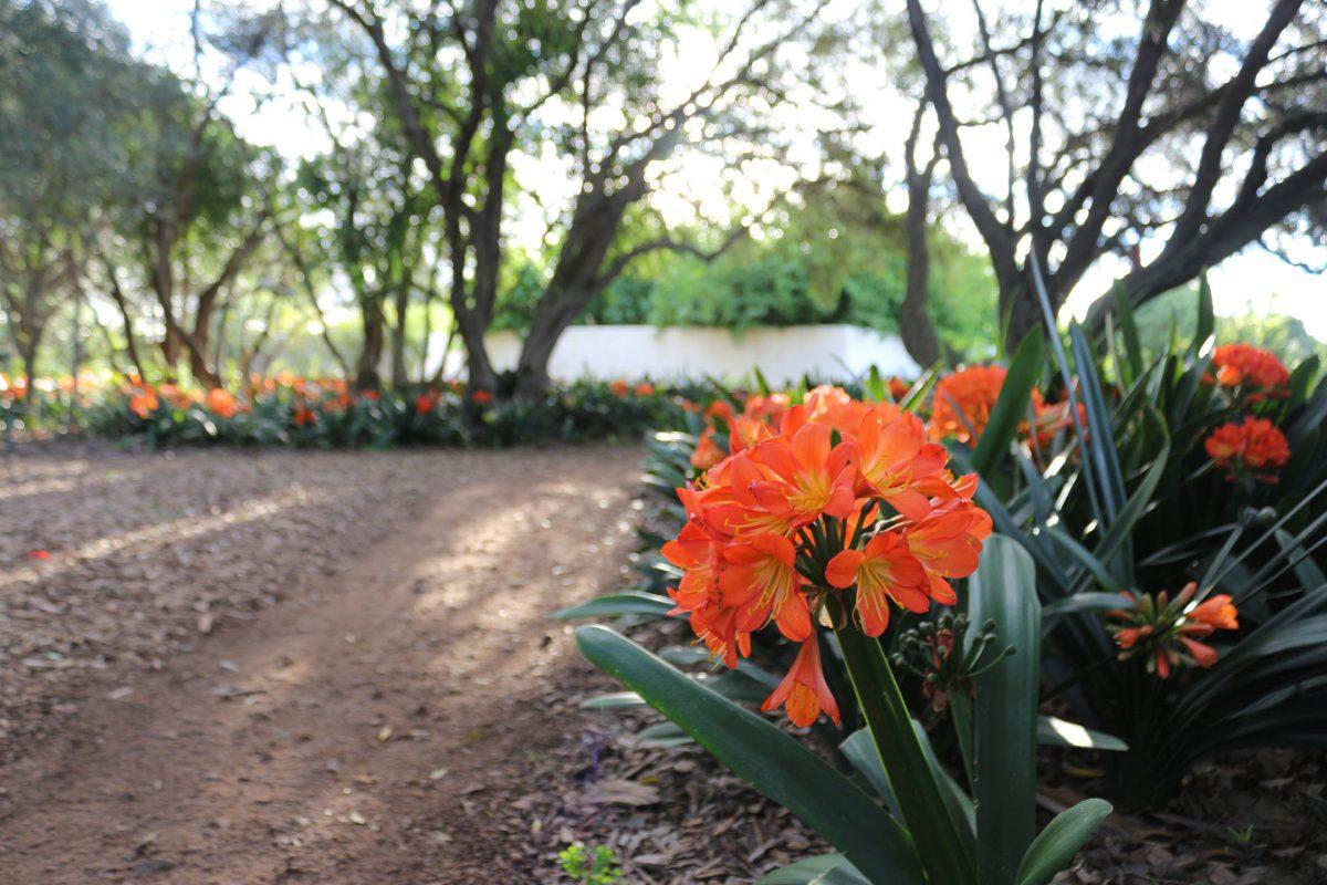 South Africa Gardens, Nima Lodge, South Africa Tourism