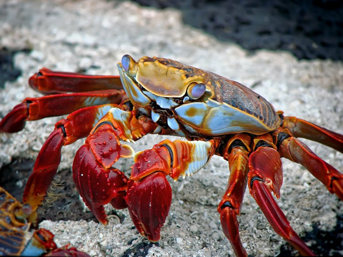 The Best Seafood Restaurants, Crab, Joe's Seafood, Prime Steak & Stone Crab