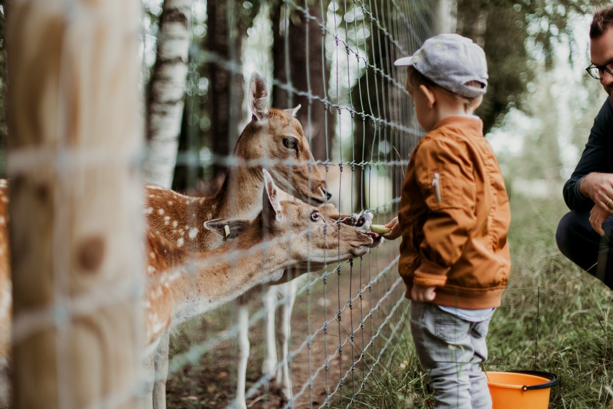 daiga ellaby Sg OwwU2Z9o unsplash 1 - Everything You Need to Know About Jacksonville Zoo