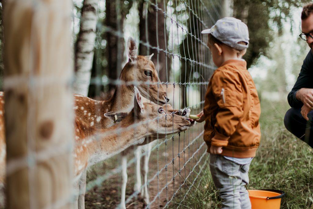 Danish Capital Zoo