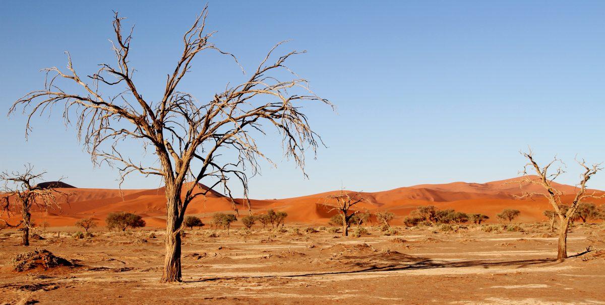 Withered tree at Kalahari Desert