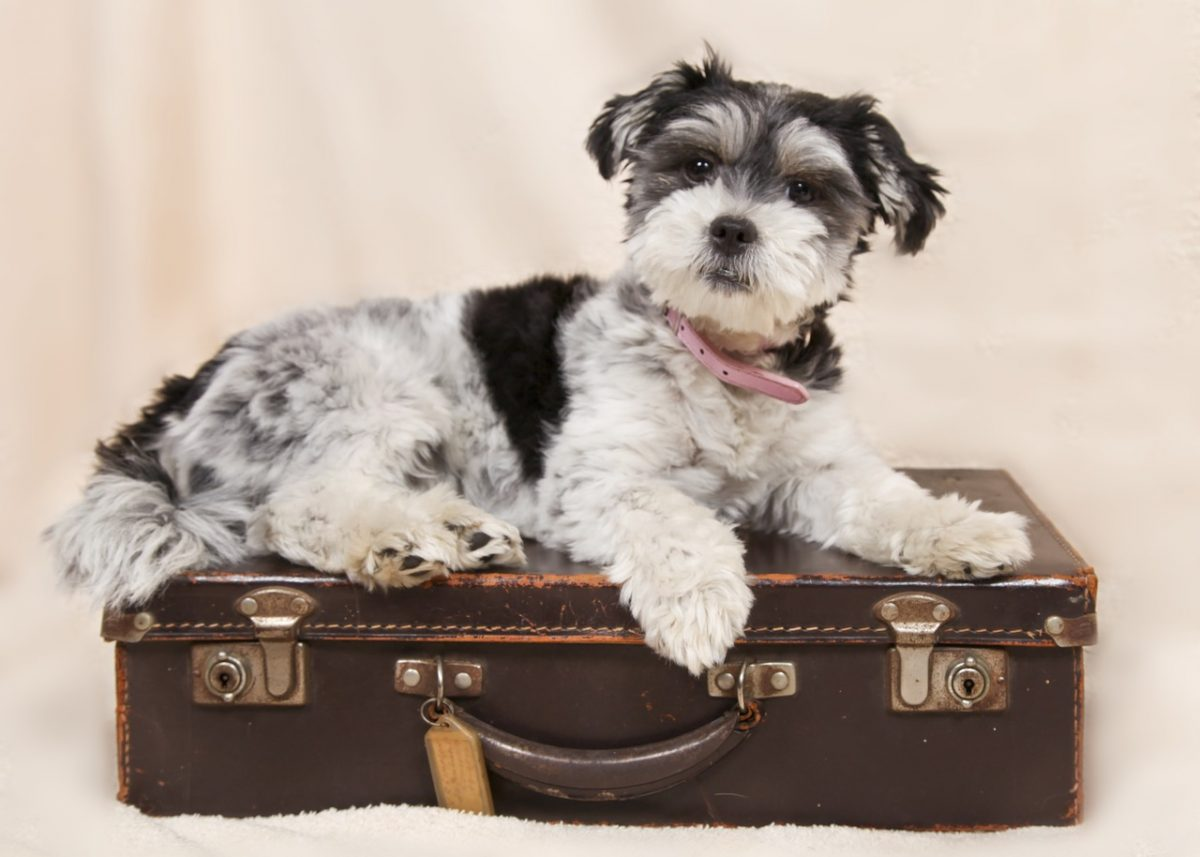 Dog sitting on a suitcase