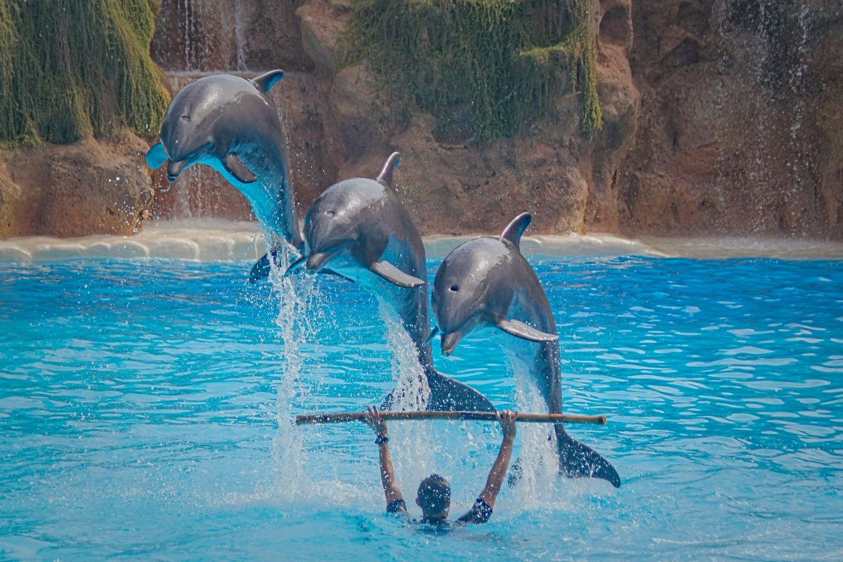 3 Dolphins Show in Waterpark