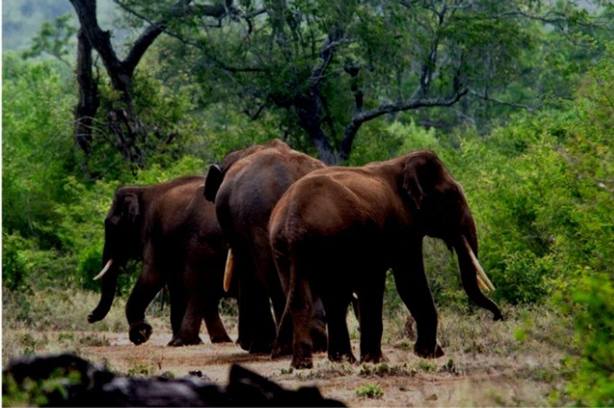 Elephants near Athirapally Waterfalls