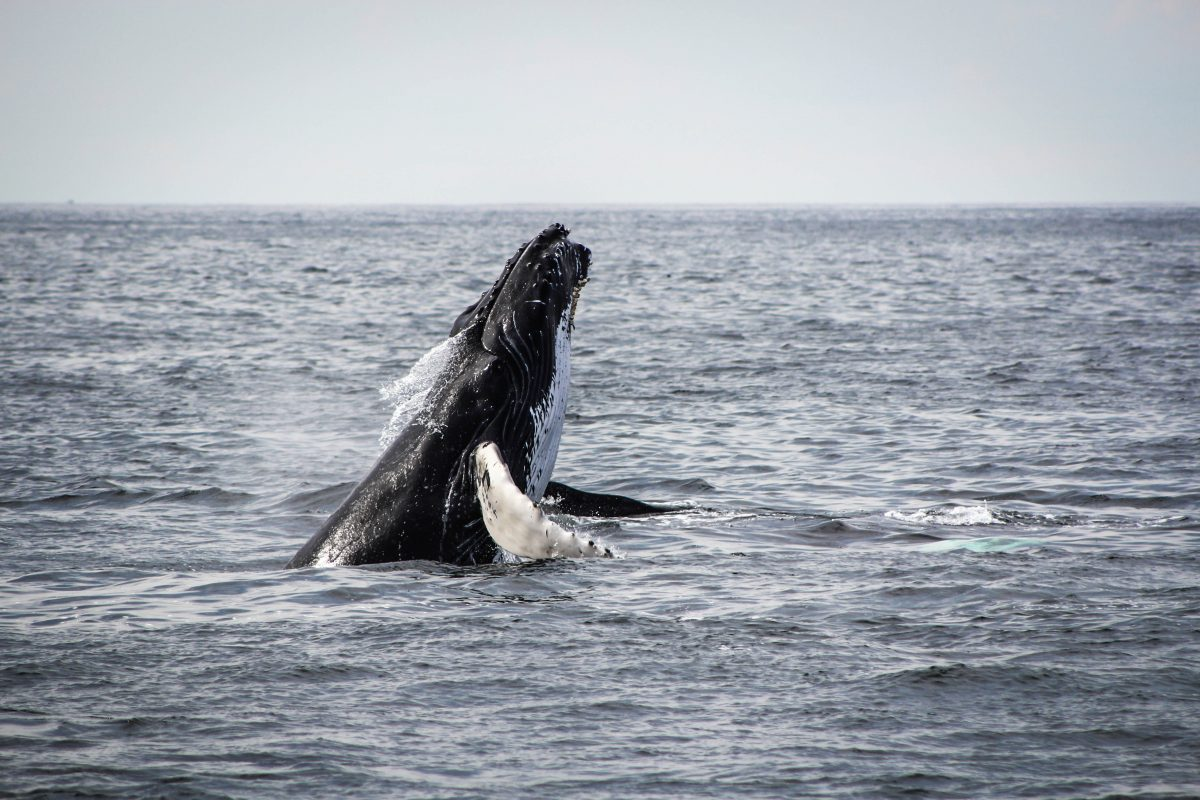 Whale Watching Tour, Santa Barbara, California, USA