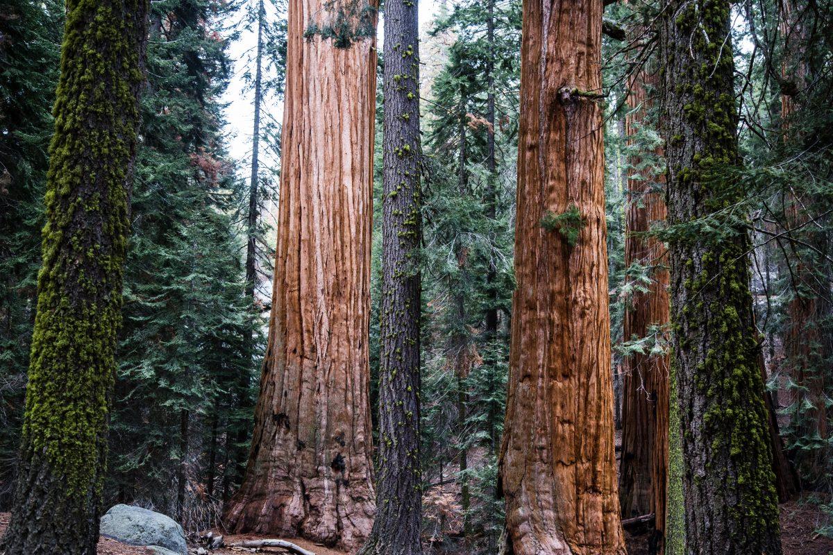 Redwood National Park, California, USA, Top 3, World Traveller