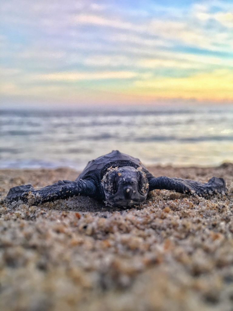 puerto escondido, mexico, sea-turtles, beach