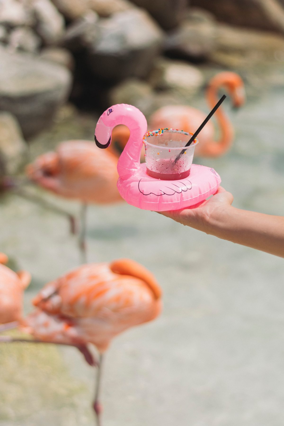 Small flamingo drink in front of real flamingos on Flamingo Beach