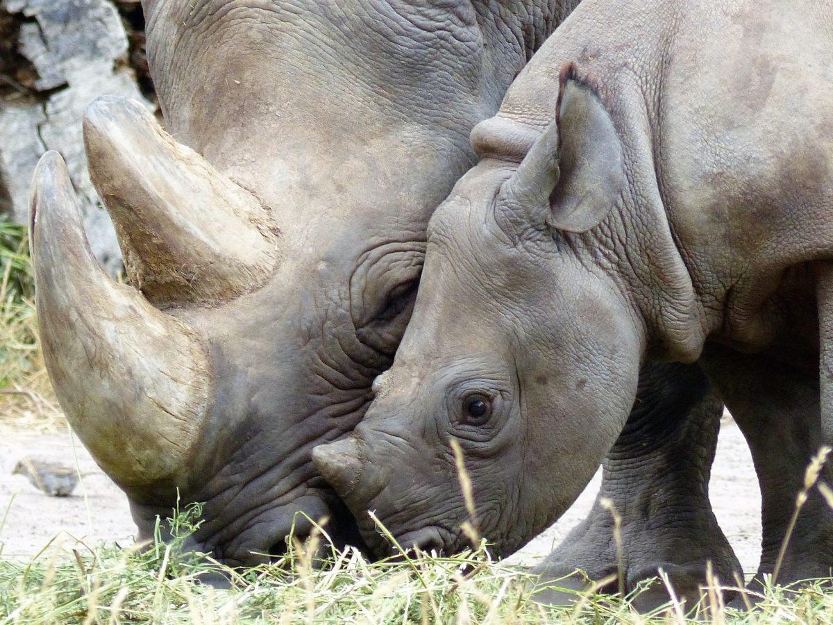 If you want to learn more about black rhinos, make your way to the African Plains exhibition