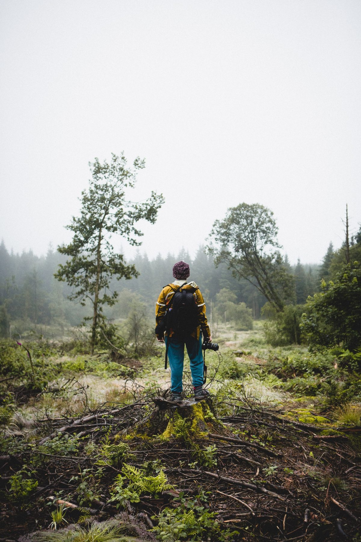 samuel thompson pjk1OPA0YM4 unsplash - Why You Need A Trail Camera On Your Next Vacation