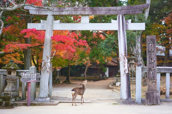 Best Things To Do In Nara, Japan