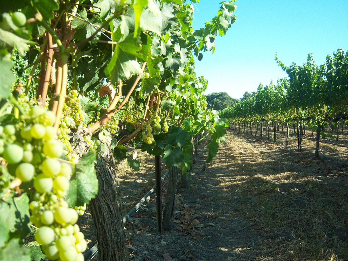 Santa Barbara Winery, Things To Do In Santa Barbara, California, USA