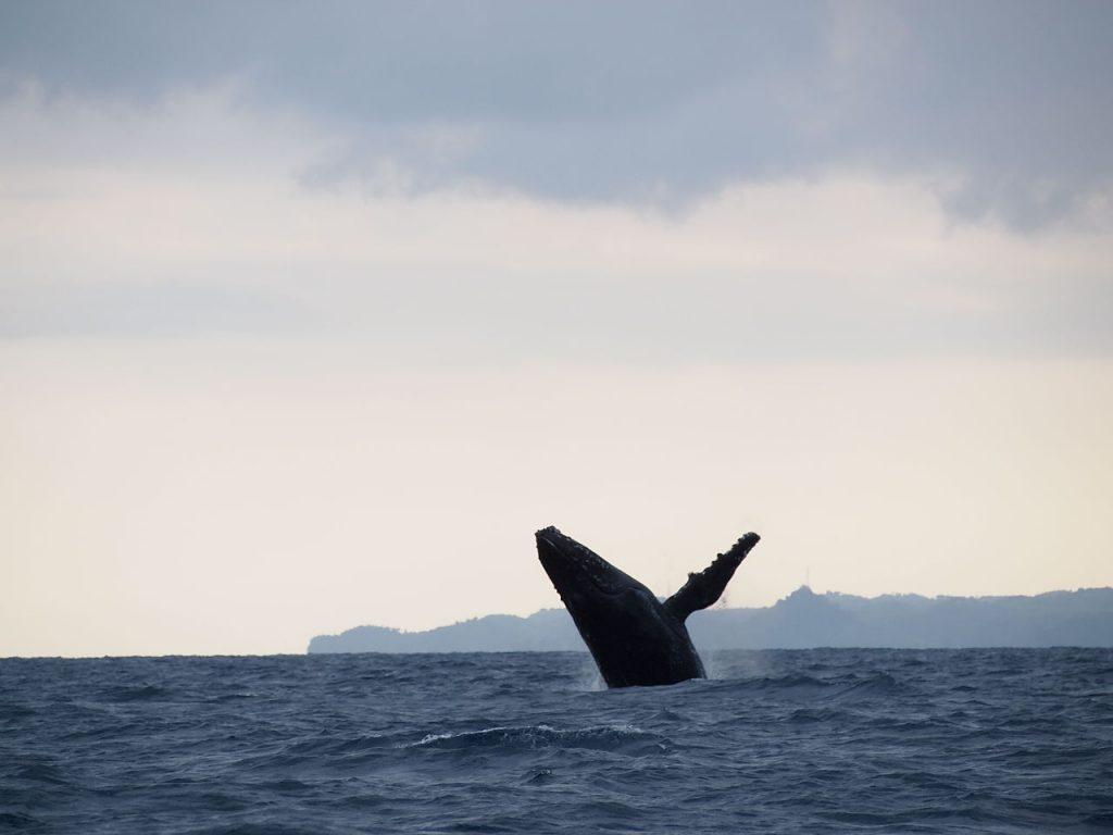 whale, madagascar