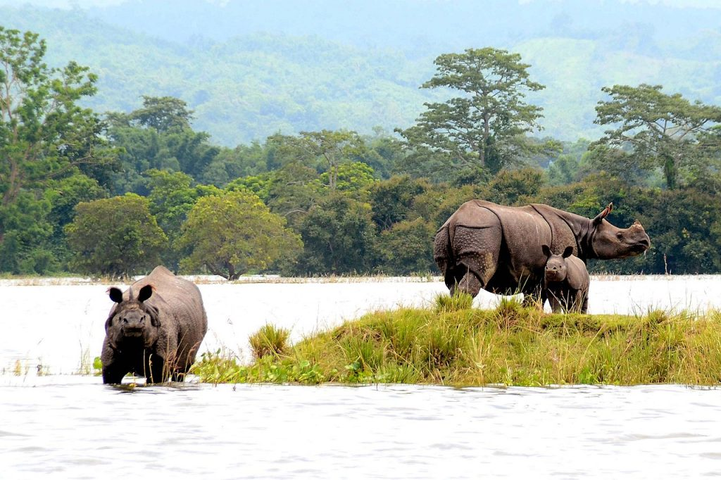 rhinos, national parks in india