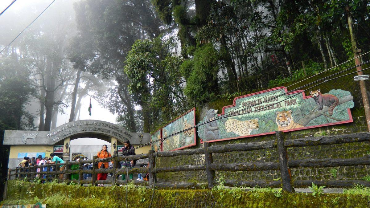 Padmaja Naidu Himalayan Zoological Park, Darjeeling