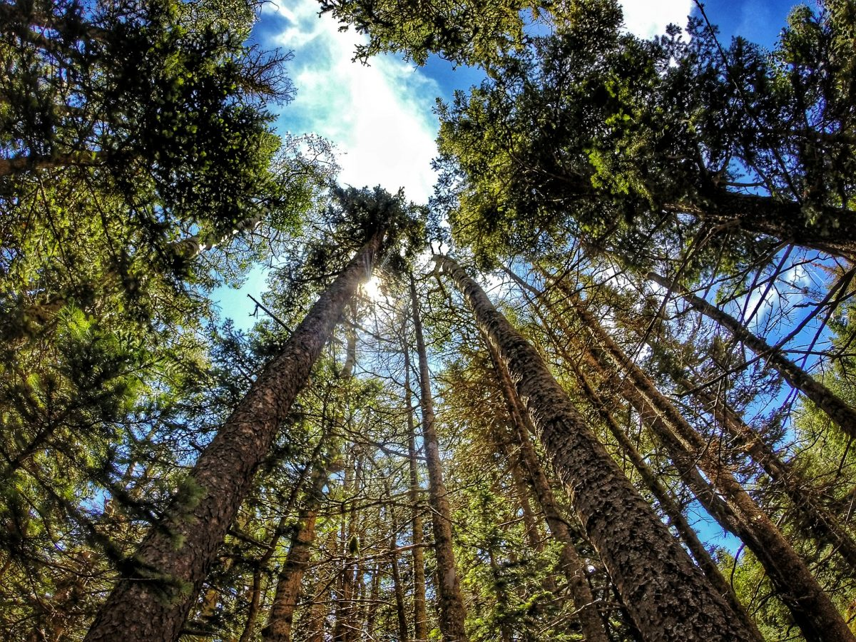 The Cibola national forest is 1.6 million acres of land with 4 national forest districts and two National Grassland areas.