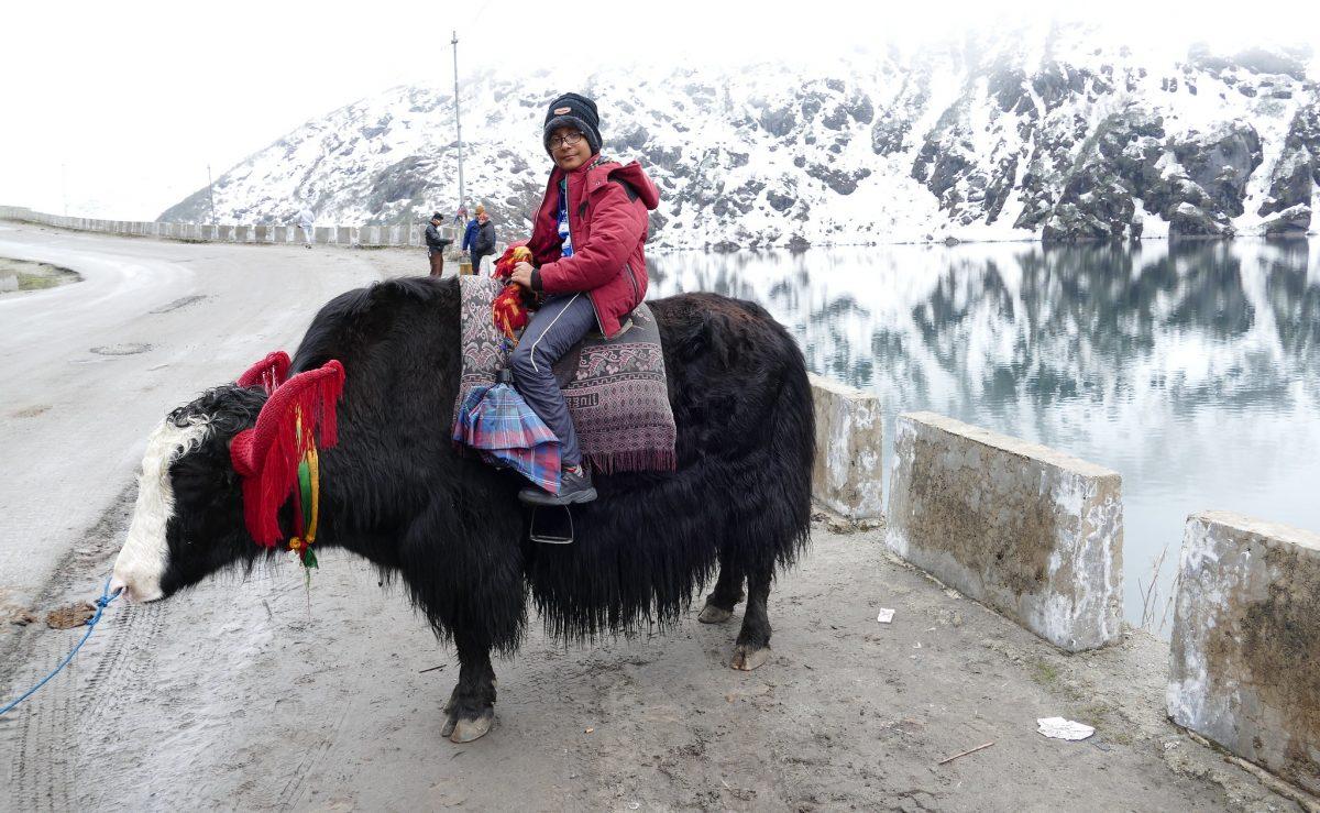 A boy on a yak in Gangtok
