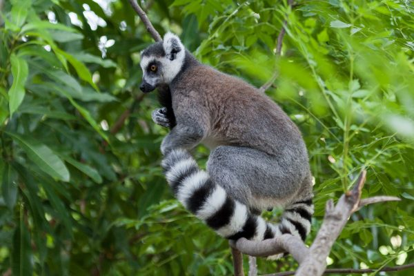 Madagascar Travel: All You Need To Know