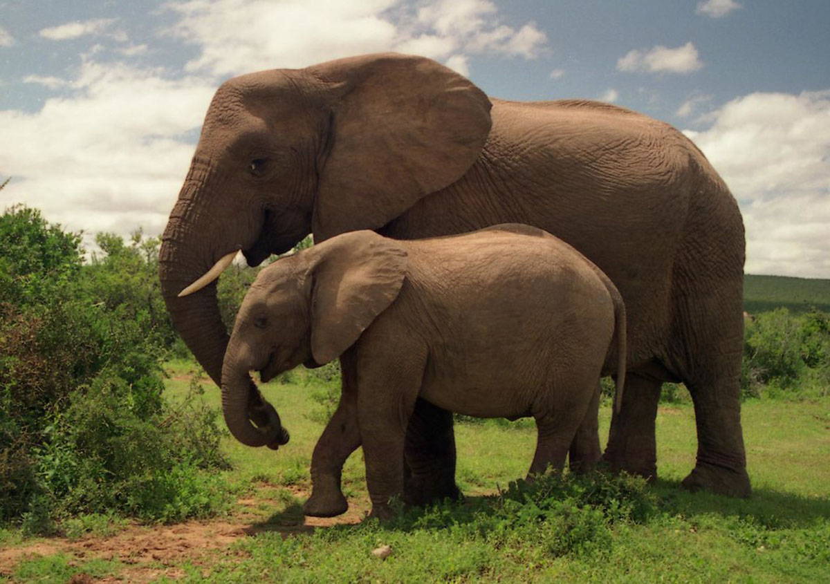 a mother and baby elephant walking together at Addo National Park