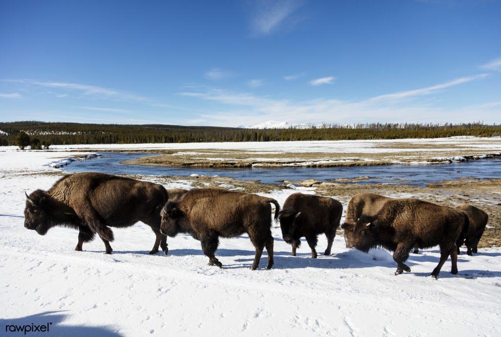 American Yellowstone NP